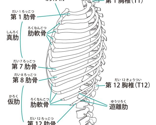 PT大沼俊博の臨床家ノート 姿勢・動作分析(その2)